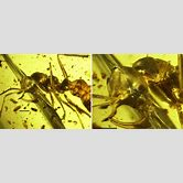 prehistoric-insects-in-amber