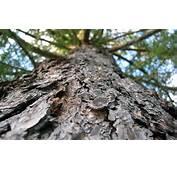 Tree Wallpaper Bark  HD Desktop Wallpapers 4k