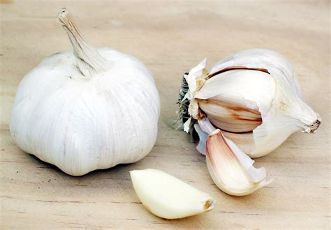 file garlic jpg wikipedia