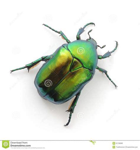 imagenes de insectos verdes escarabajo verde imagen de archivo imagen de color