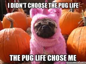 Pug Life Meme - pug life