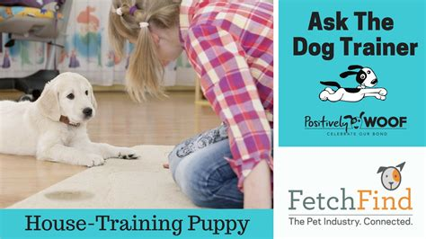 house training my dog ask the dog trainer how can i potty train my puppy
