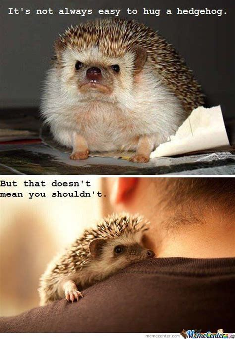 Hedgehog Meme - hedgehog memes best collection of funny hedgehog pictures