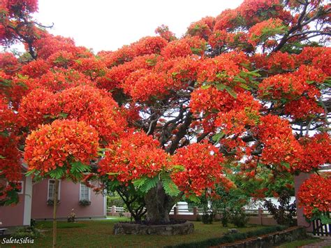 beautiful trees the 16 most beautiful trees in the world