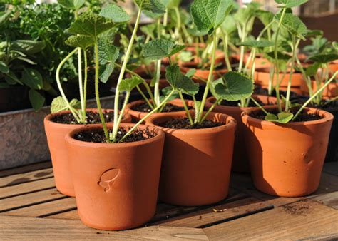 Where To Buy Outdoor Planters Buy 3 Terracotta Seedling Pots
