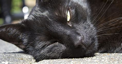 heat l for cats how to help your cat keep cool in the summer heat