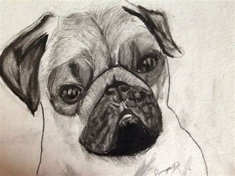cool drawings of pugs search results for cool drawing pictures calendar 2015