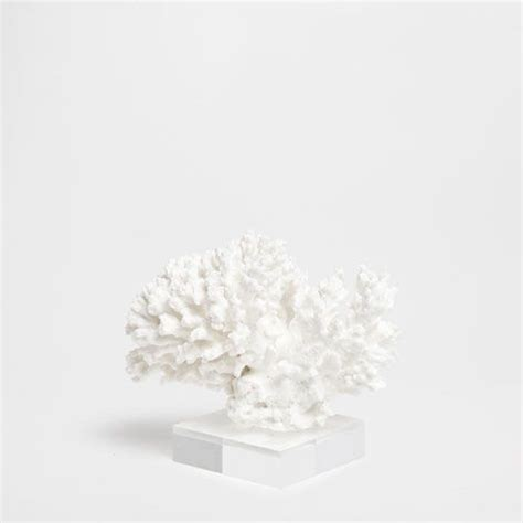 Coral Decor Australia by Decorative Coral Decoration Accessories Decoration