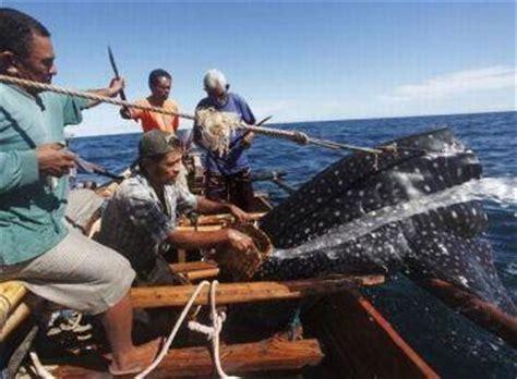 Flatform Hak Dan Tali Leo nelayan pemburu ikan paus itu berasal dari masyarakat