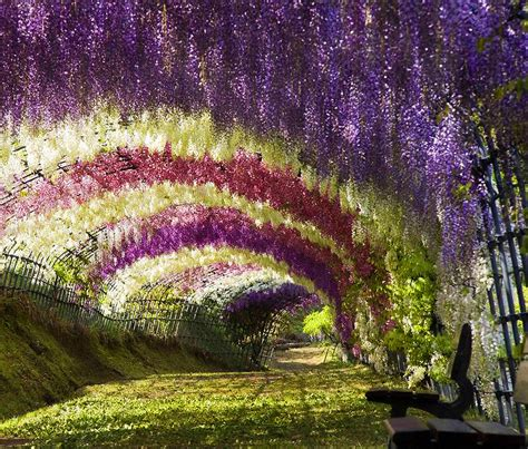 Flower Garden Japan Beautiful Flower Garden With Hanging Flowers I Like To Waste My Time