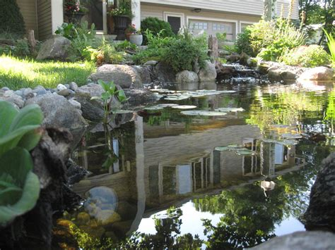 backyard scapes hometalk nature scapes ecosystem pond transforms yard