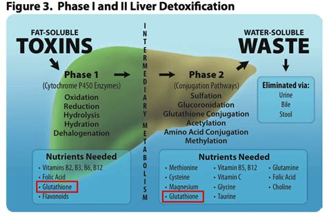 Glutathione Liver Detox by Do Detox And Juice Cleansing Really Work Immunocal