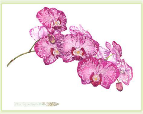 botanical artist p a kessler watercolors gallery