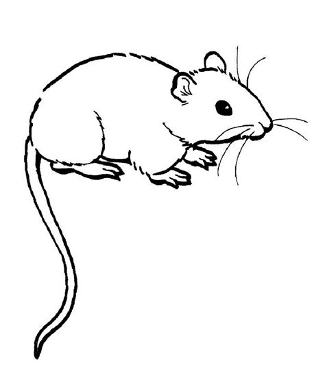 what color are rats free printable rat coloring pages for
