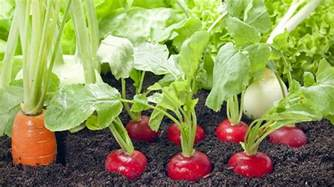 21 Spring Vegetable Garden Plants Perfect For Spring