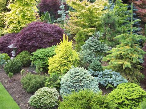 backyard trees and shrubs sprucebud s image plant combinations pinterest