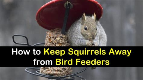 how to keep squirrels away from bird feeders