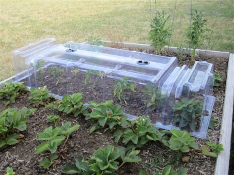 Growing Vegetables In A Polytunnel Vegetable Garden Row Covers