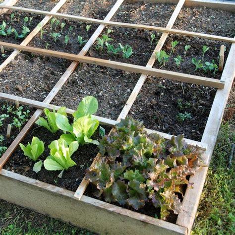 7458 Best Vegetable Gardening Images On Pinterest Raised Vegetable Gardens For Beginners