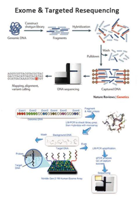 whole genome sequencing illumina exome targeted resequencing