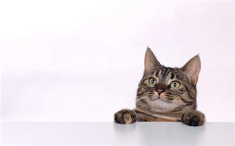 cat background cat background wallpaper 1920x1200 82409