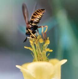 Madu Rosella Terbaik Valerie Madu madu asli yaman ihya sunnah madu yaman madu terbaik dunia kini