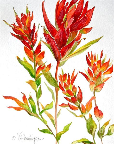 indian paintbrush painting by virginia ann hemingson