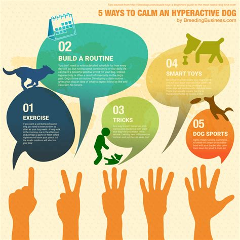 how to a hyper to be calm how to calm a hyperactive or hyperactive puppy auto design tech