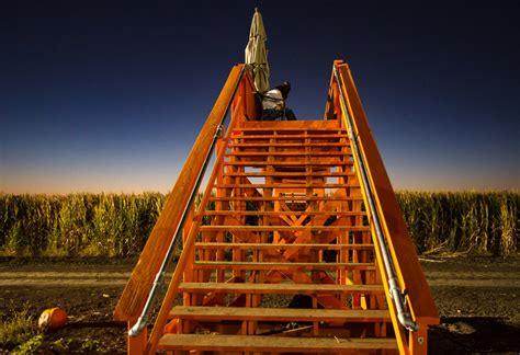 time  cool patch pumpkins corn maze  california