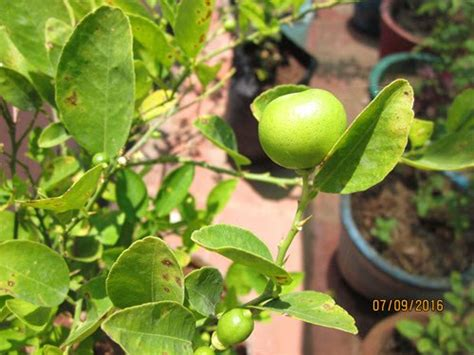 20 Plants For Beginners To Grow In Their Terrace Garden Lime For Vegetable Garden