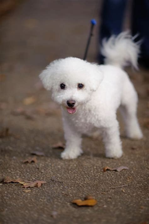 show me pictures of baby puppies can t wait to up our puppy show me your family pic w your puppy weddingbee