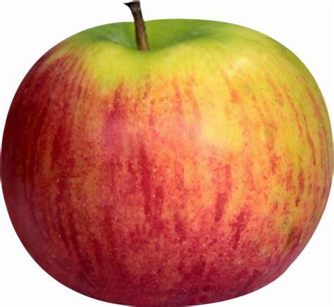 Buah Apel gambar buah apel segar aku buah sehat