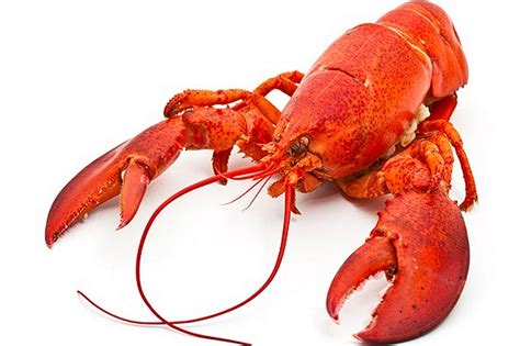 the lobster lobster hd wallpapers
