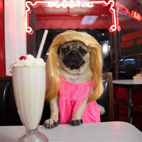 pug diner menu what if riverdale casts are pugs cuteness overflow