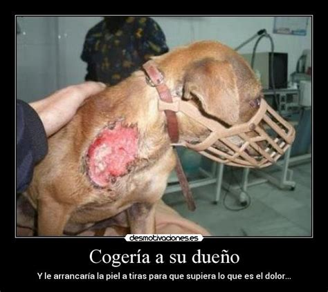 imagenes animales maltratados im 225 genes y carteles de maltratados desmotivaciones