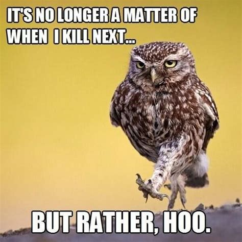 Owl Memes - 20 puns that are so bad they re good pleated jeans