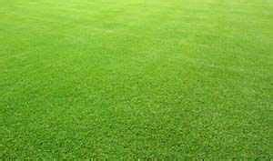 bermuda couch grass bermuda grass lawn care tips lawn green lawn care lawn