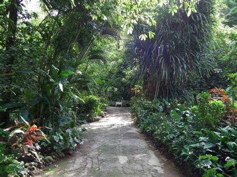 St Lucia Botanical Gardens Botanical Gardens And Waterfall St Lucia Tourist Attractions Rainforest
