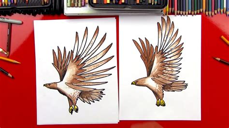 how to draw how to draw a realistic hawk for hub