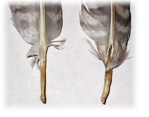 for those that collect stray feathers