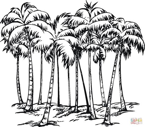 coloring book pages palm tree some of coconut palms coloring page free printable