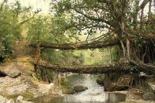 Living Bridges by The Khasi Tribe In India Builds Living Bridges Using Tree