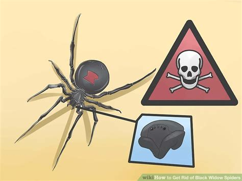 Can A Garden Spider Kill You How To Get Rid Of Black Widow Spiders With Pictures
