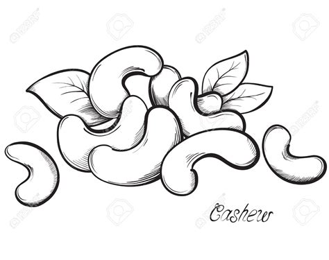 clipart black and white cashew clipart black and white pencil and in color