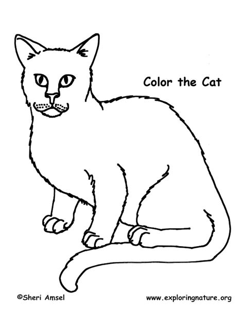 nature cat coloring page cat coloring nature
