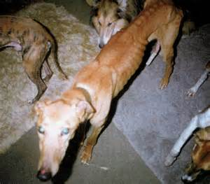 puppy abuse mistreated dogs