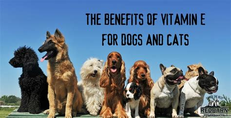 vitamin e for dogs the ultimate guide to the benefits of vitamin e for dogs and cats