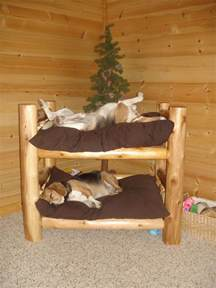 Bunk Bed For Dogs 25 Best Ideas About Beds On Pet Beds Rooms And Pet Products