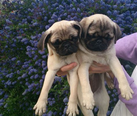 14 week pug been no way clomid 50 mg be worthwhile for up six months and