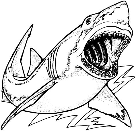what color are sharks free coloring pages of draw sharks